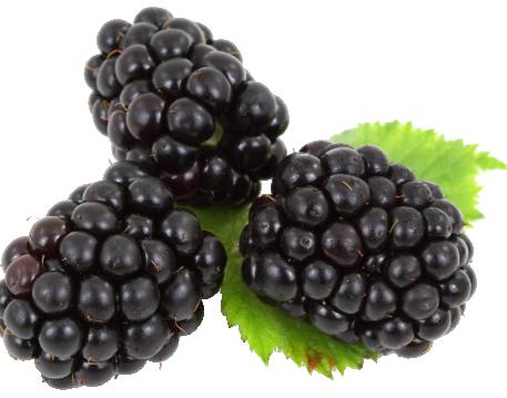 _Fruits