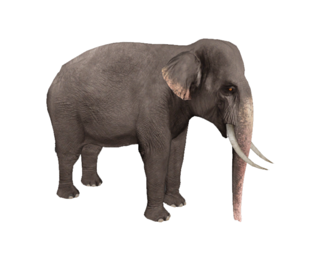 Elephant Png Png Image Download 13 Png 5432 Free Png Images Starpng Available in png and vector. elephant png png image download 13